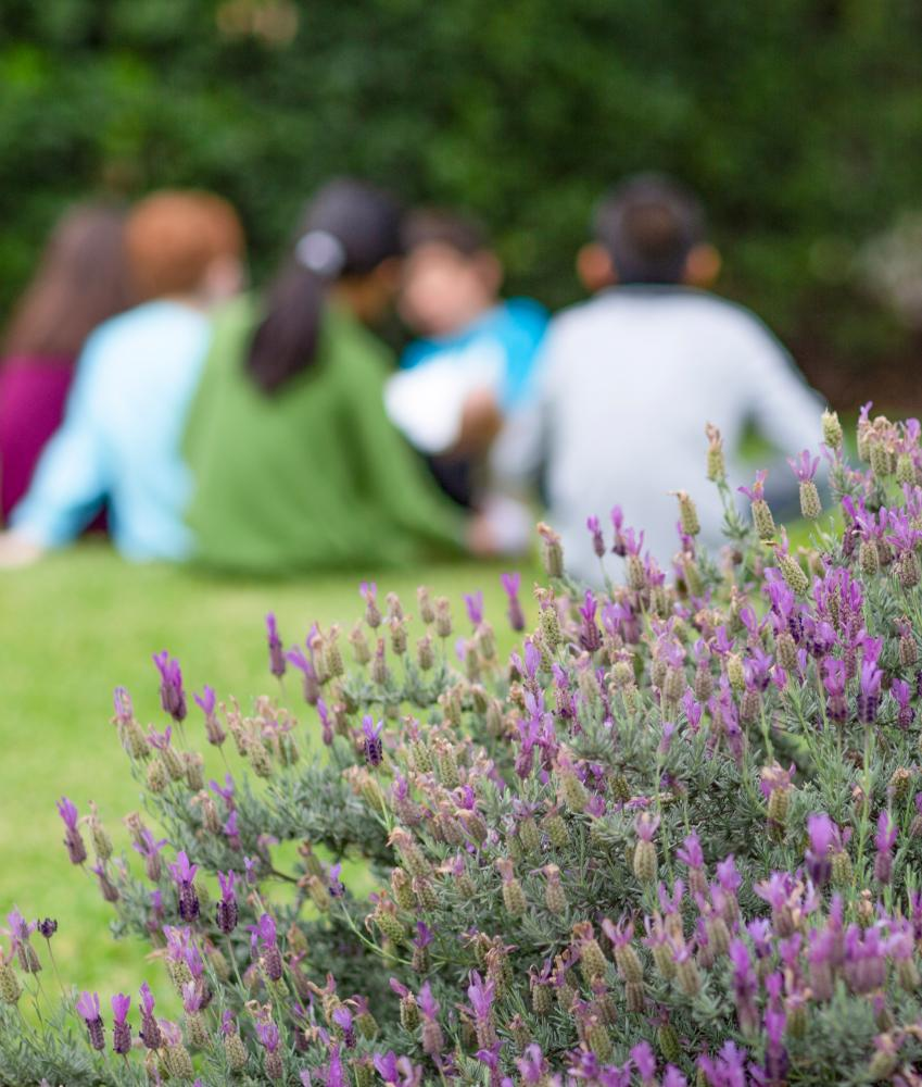 An image of a group of young children sitting together on a grassy hill. A bush with purple flowers sits in the forefront of the image with the flowers in focus.